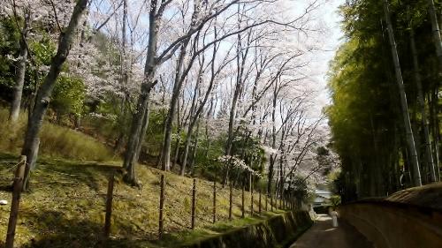 上賀茂神社の神職さん