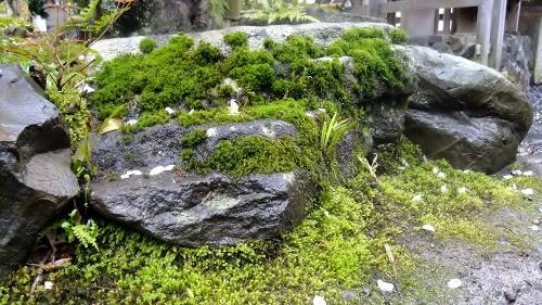 ボリューム満点の苔