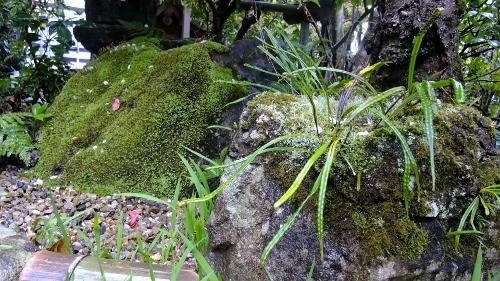 石が見えないくらいの苔
