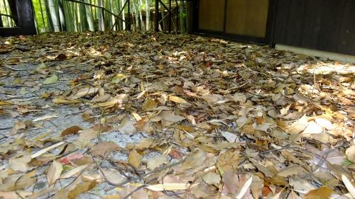 落とした葉