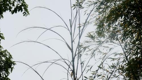 先端を取った竹