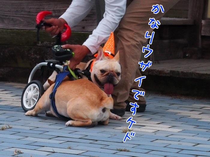 20141102011313fcb.jpg