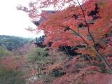 201411清水寺紅葉