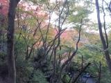 201411清水寺紅葉4