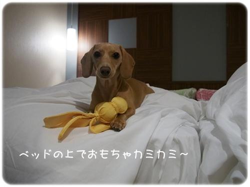 ベッド上で遊ぶバニラ