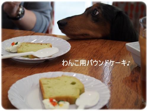 Alex君とパウンドケーキ