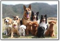 Conforto Dogs