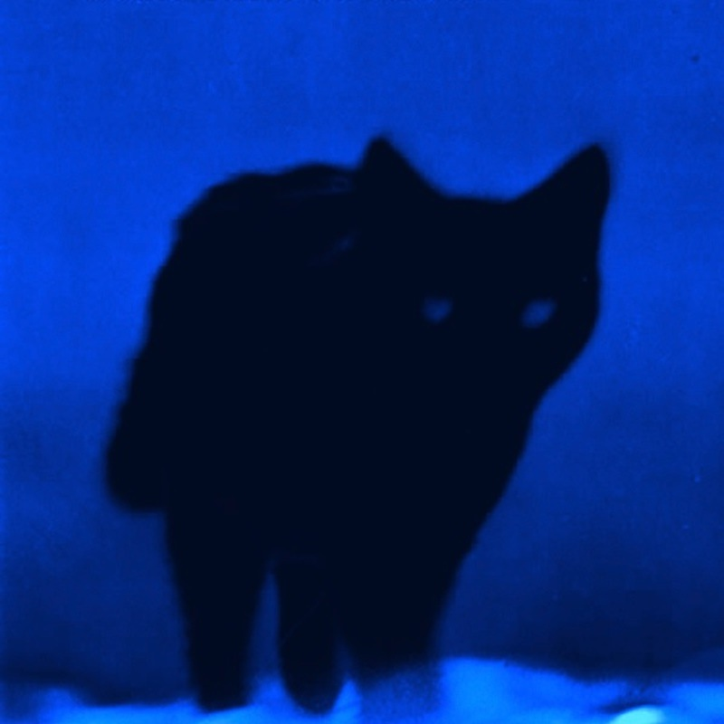 Shadow_CAT_800PX.jpg