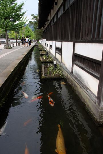 20100813_tsuwano-03.jpg