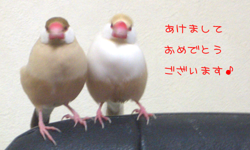 あけおめ26_1