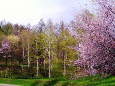 なまこ山の桜