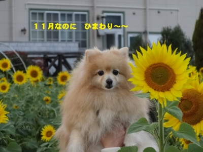 DSC066560.jpg