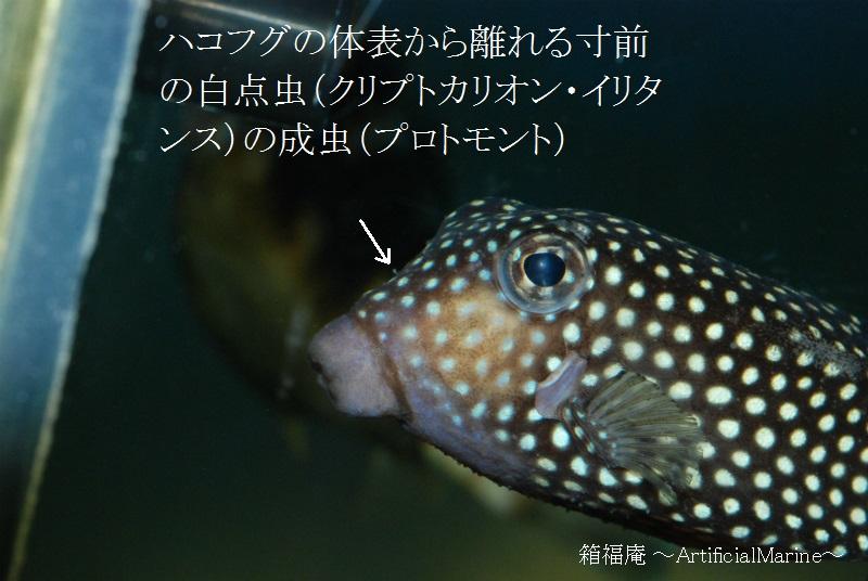 DSC_2667.jpg