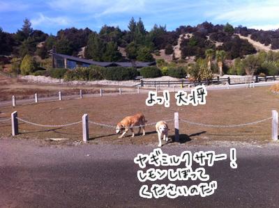 羊の国のラブラドール絵日記シニア!!「思うようには・・・」写真日記1