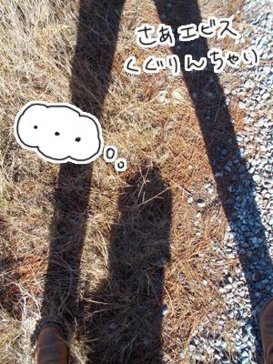 羊の国のラブラドール絵日記シニア!!「思うようには・・・」写真日記3