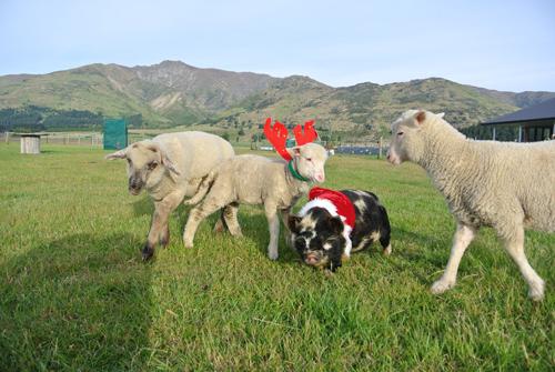 羊の国のラブラドール絵日記シニア!!「写真撮影」3