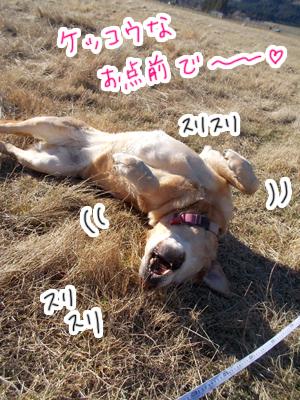 羊の国のラブラドール絵日記シニア!!「おもちかえり」写真日記2B