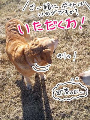 羊の国のラブラドール絵日記シニア!!「おもちかえり」写真4