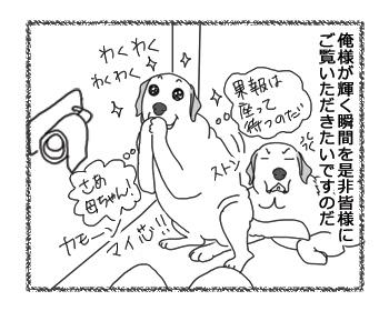 羊の国のラブラドール絵日記シニア!!「俺様の晴れ舞台」2