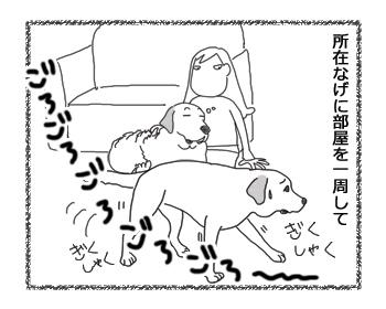 羊の国のラブラドール絵日記シニア!!「おヘソは無事」4コマ3