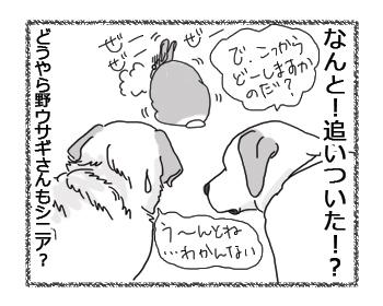 羊の国のラブラドール絵日記シニア!!「シニアの決めごと」3
