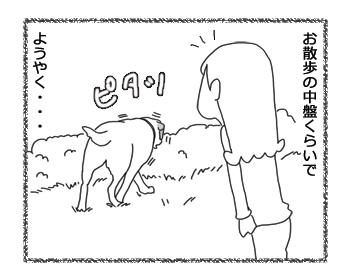 羊の国のラブラドール絵日記シニア!!お散歩ソロ活動4