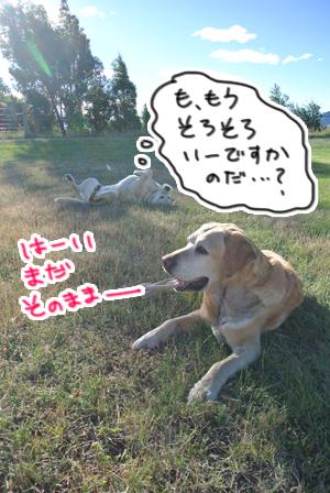 羊の国のラブラドール絵日記シニア!!「師走の途中ですが・・・」写真日記5