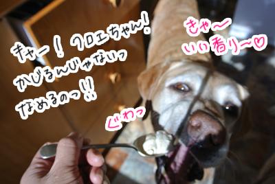 羊の国のラブラドール絵日記シニア!!「クロエ現場監督」写真日記2