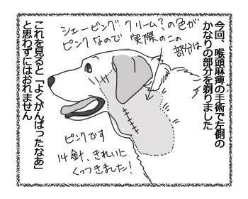 羊の国のラブラドール絵日記シニア!!「乙女の悩み」1