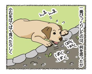 羊の国のラブラドール絵日記シニア!!「犬種ならでは?」6
