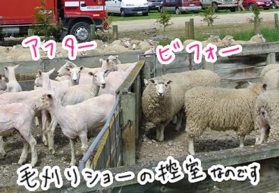 羊の国のラブラドール絵日記シニア!!「お疲れ!のワケは・・・」写真日記2