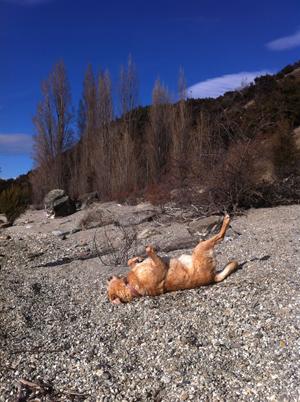 羊の国のラブラドール絵日記シニア!!「犬猫びっくりニュース!」写真日記1