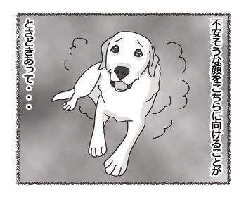 羊の国のラブラドール絵日記シニア!!「ちょっとご報告」4