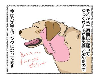 羊の国のラブラドール絵日記シニア!!「色で見る回復」2
