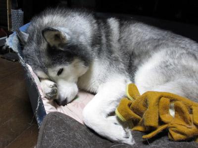 犯犬とりゅふ