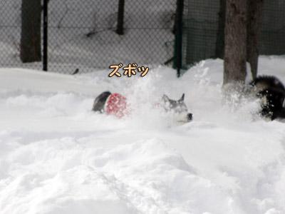 雪にズボッ