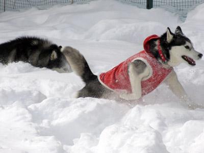 雪が深いね