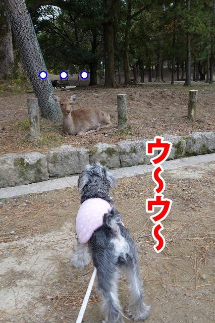 shika2_4.jpg