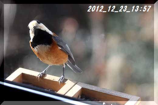 q8146_2012_12_23_001.jpg