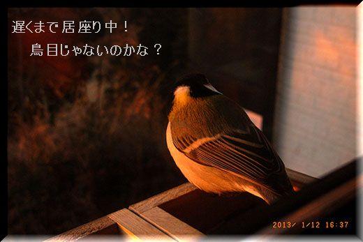 q9141_2013_01_12_08.jpg