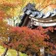 kyoto_kouyou.jpg