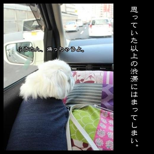 4_20140201094621428.jpg