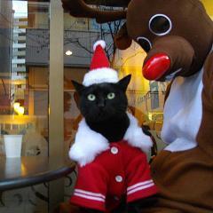 黒猫使いの鈴木