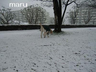 2.29 雪が降ったよ♪ 017
