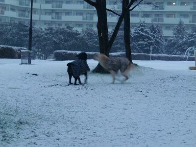 2.29 雪が降ったよ♪ 004