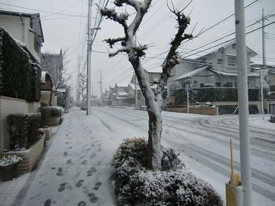 2.29 雪が降ったよ♪ 022
