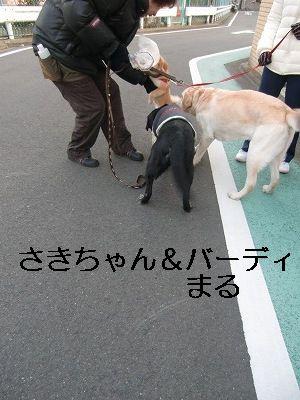 犬が歩けば~ 006