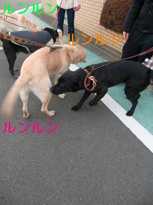 犬が歩けば~ 003