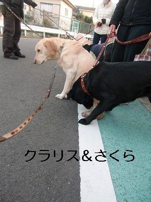 犬が歩けば~ 005