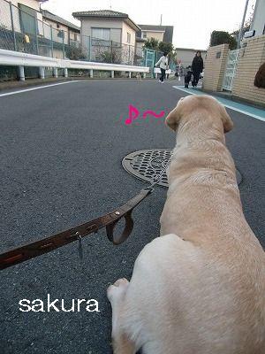 犬が歩けば~ 001